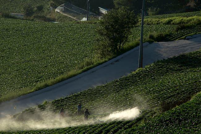 白菜 農薬散布
