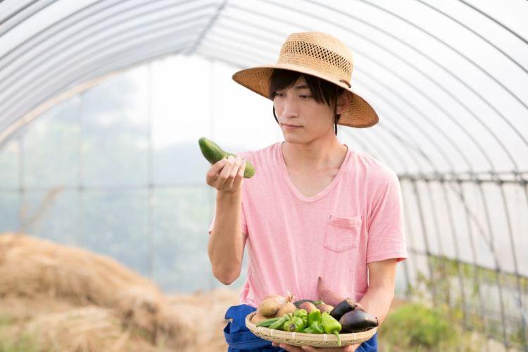 【施設栽培】ハウスできゅうり栽培!促成栽培・抑制栽培の時期やポイント