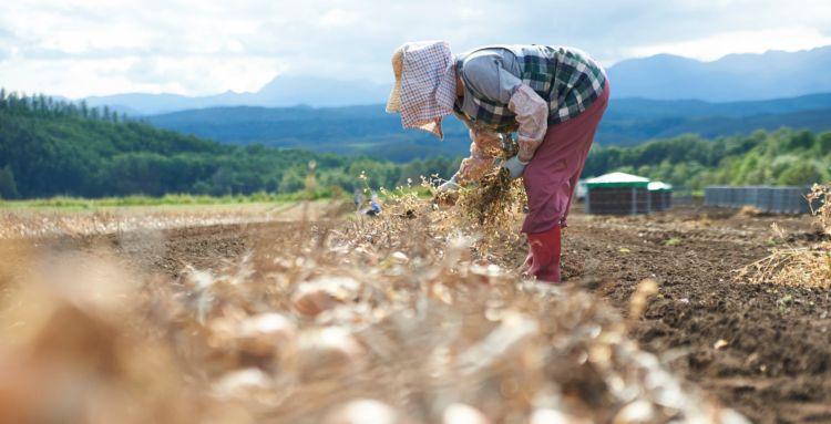 農作業 収穫