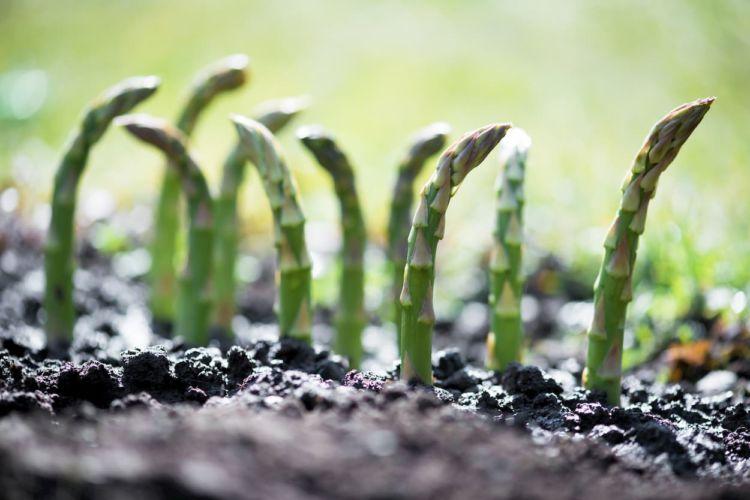 C/N比とは?有機物の分解速度から考える効果的な土壌改良方法