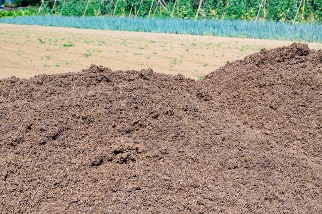 堆肥材料のうち牛糞のC/N比は中程度