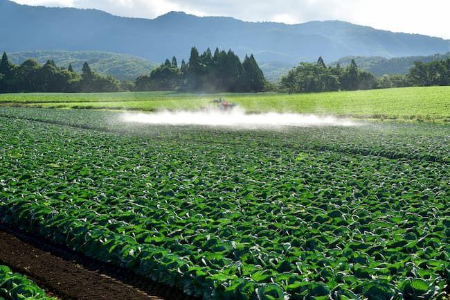 キャベツのほ場での農薬散布
