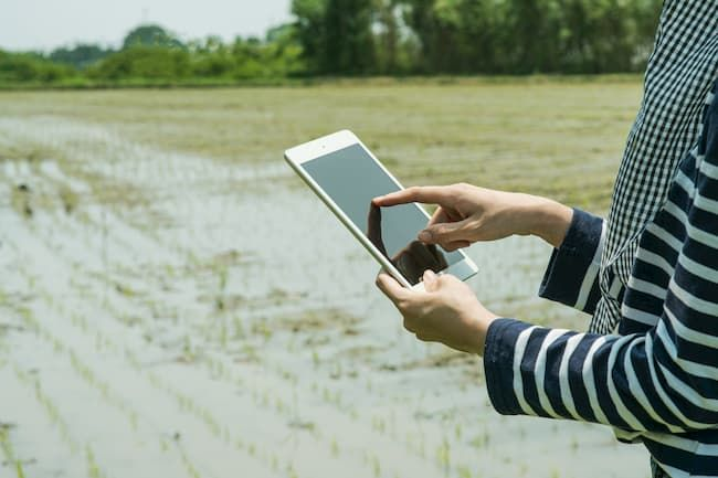 IoTによる水田の管理 イメージ写真