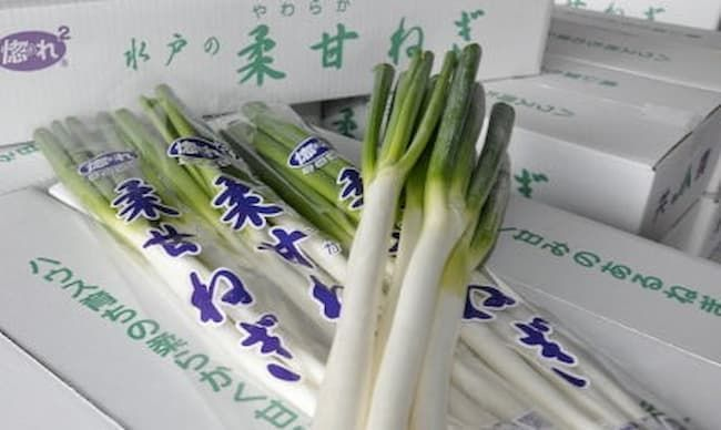 茨城県水戸市の特産品「水戸の柔甘ねぎ」地理的表示(GI)保護制度の産品登録