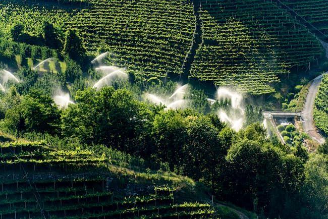イタリアのブドウ園の自動灌漑装置。CAPは過去にEUの農業の近代化・工業化を推し進めてきた