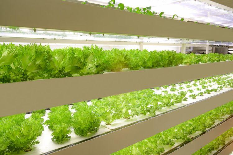 植物工場とは?そのメリット・デメリットについて解説