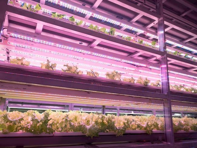 植物工場 LED