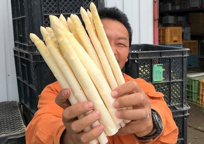 寺坂さんはホワイトアスパラガスのおいしさに感動して作り始めた