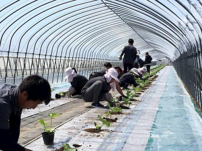 寺坂農園作業風景。スタッフをうまくまとめることも経営者の資質の一つ