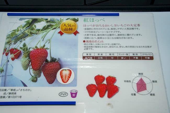 やすださん家のスィーツ園 イチゴの品種紹介パネル
