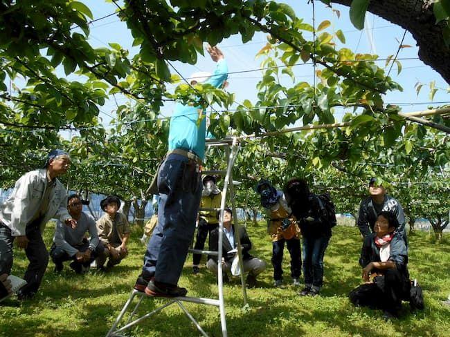 梨名人から栽培管理と技術を学ぶ『梨人』メンバー