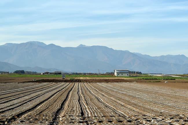 耕起して石灰が撒かれている畑