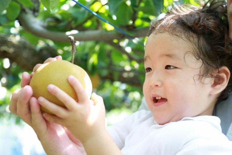 食料自給率とは? 計算方法や日本の状況などについて解説