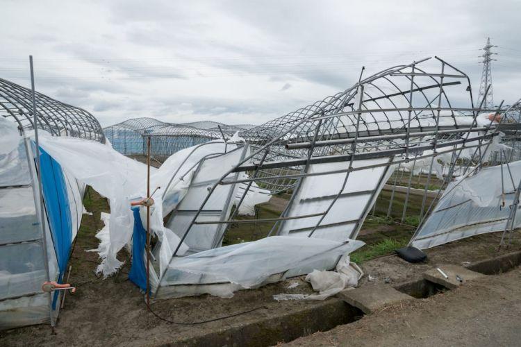 台風対策!ビニールハウス(パイプハウス)の被害を抑える補強と保険