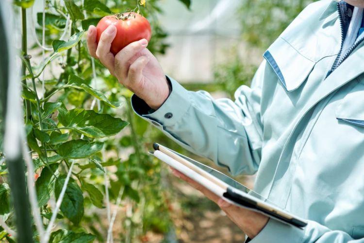スマート農業の導入を検討するとき参考にしたい事例を紹介