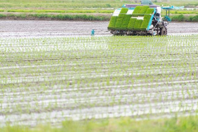 田植え機は精密になり田植えにかかる労力を大幅に削減している