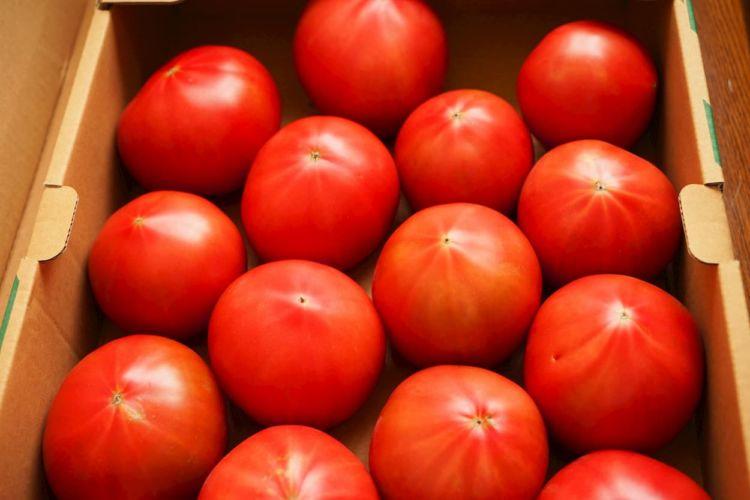 トマトの高温障害の症状&対策を解説!酷暑でも収量を落とさない対策を