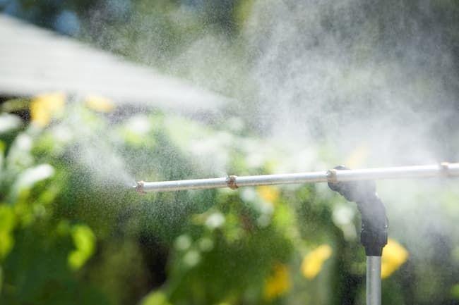 農業用ドライミストは高温障害対策になる