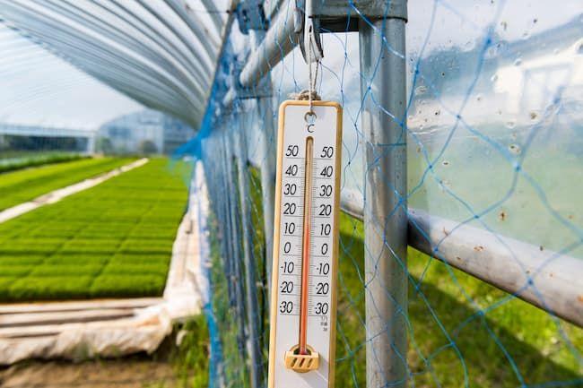 農業用ハウスの利点は温度や湿度など作物に適した温環境を調整できる点