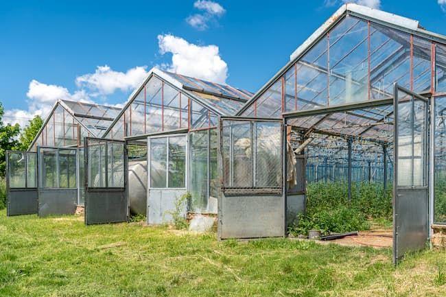農業用ハウスはプラスチックハウス(ビニールハウス)とガラスハウスに大別される