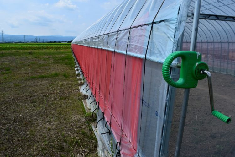 農業用ハウスを利用するメリットとは?ハウスの種類や価格についても解説