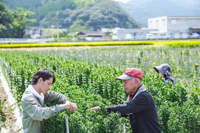ベテランの高齢農家から生産技術を教わる青年