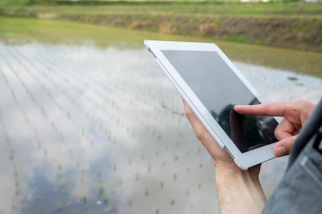 タブレットで栽培管理・生産管理をする稲作農家