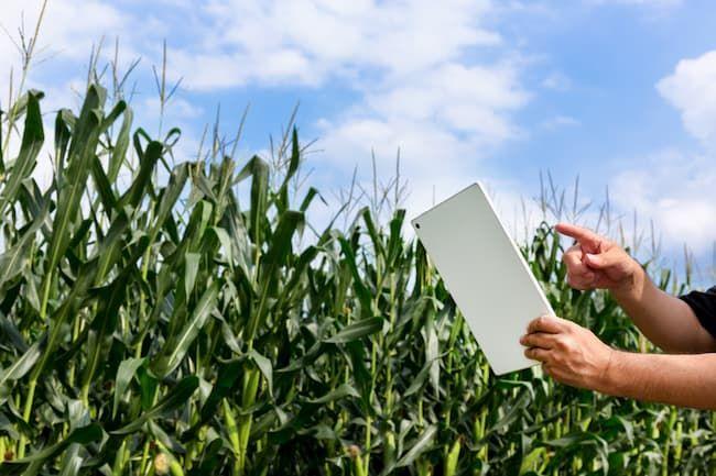 農業 栽培管理