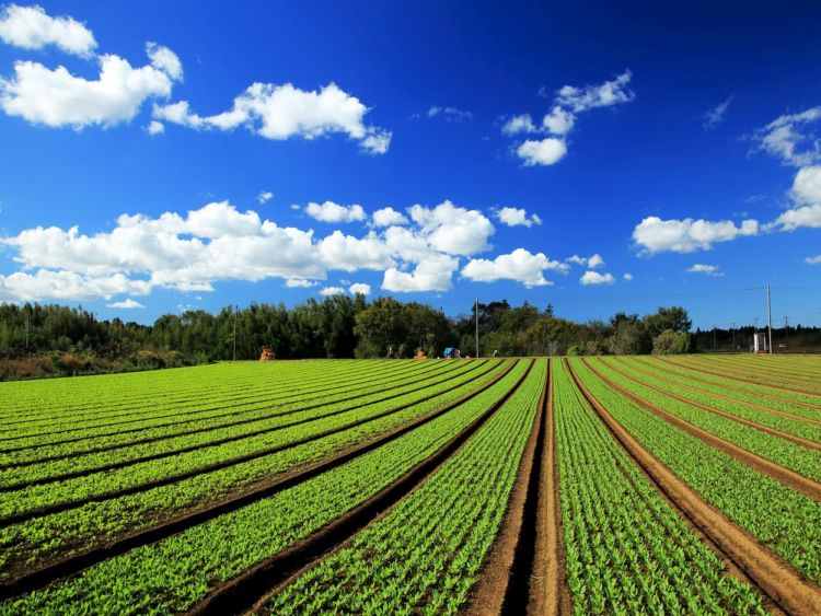 ほうれん草の最適な株間と条間とは?失敗を防ぐ栽培方法を播種から解説