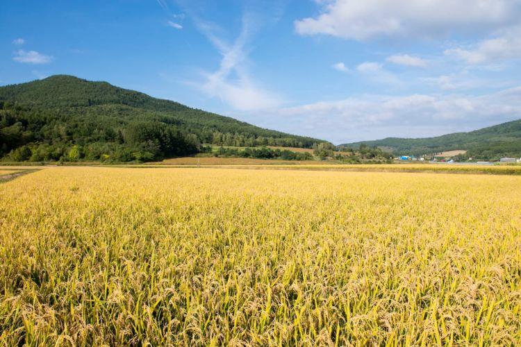 農地集積・集約化とは?新規就農者が知っておくべきその意味とメリット