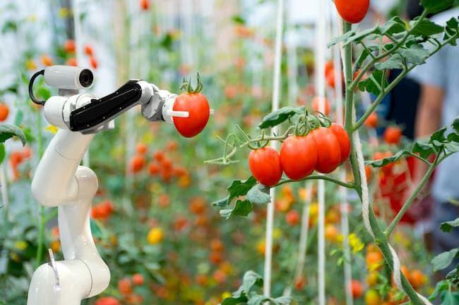 スマート農業 収穫ロボット