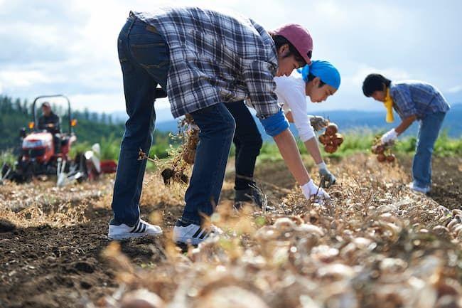 農家 収穫作業