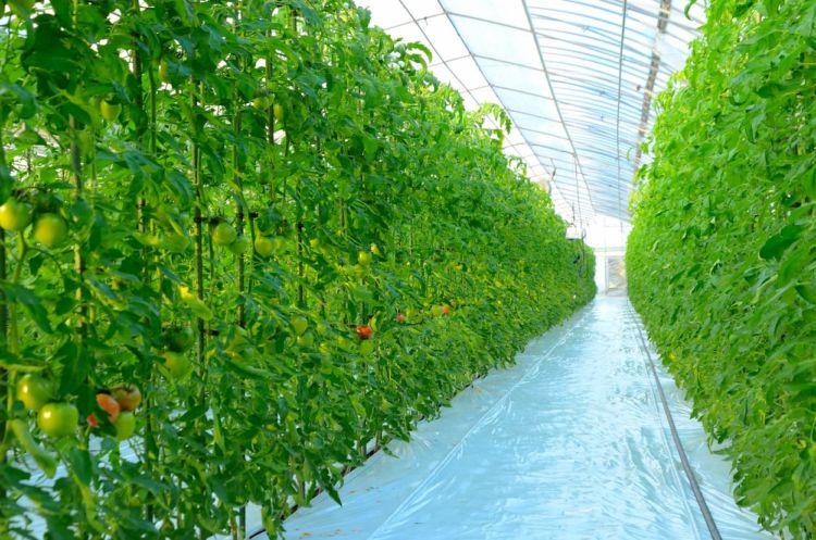 環境制御装置とは? 施設園芸(ハウス)への導入で得られるメリット
