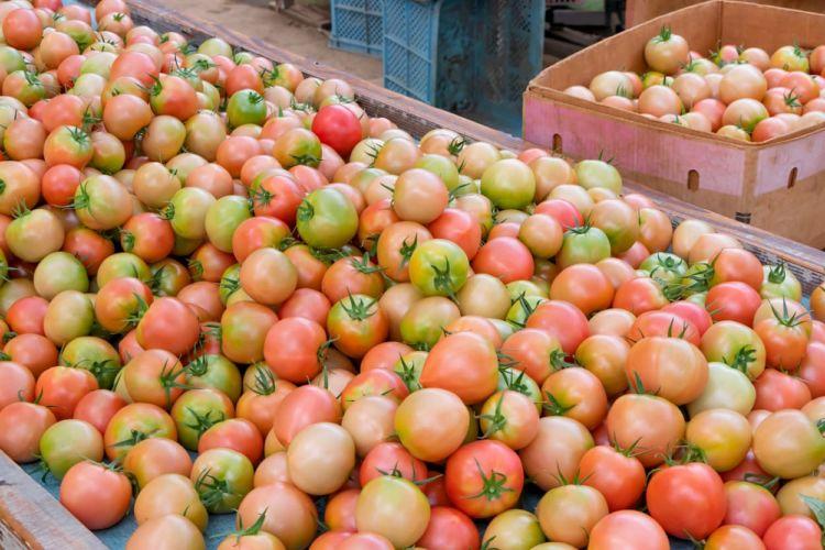 野菜の品目別反収一覧表! 農業で「儲ける」ために選ぶべき作物は?