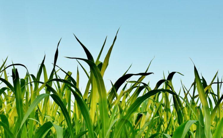 緑肥作物の種類と効果一覧!緑肥のメリットや注意点、すき込み方法も解説