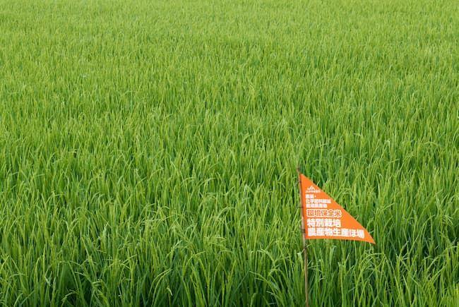 登米市の環境保全米特別栽培農産物生産ほ場
