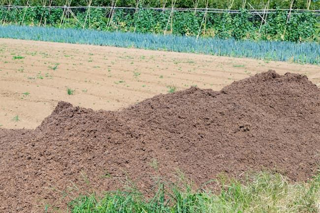 畑に積まれた牛糞堆肥