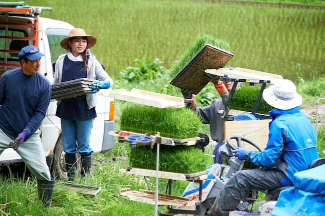 農作業 田植え