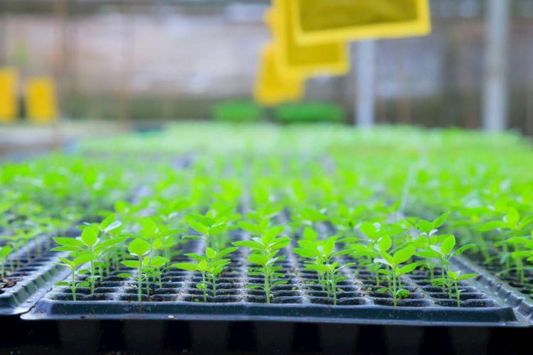 ベルグ福島の野菜苗生産はなぜ成功したのか?6次化ファンドの活用事例