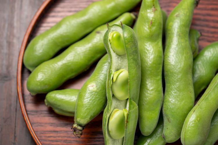 【空豆(そらまめ)の連作障害対策】輪作年限や前作・後作に適した作物は?