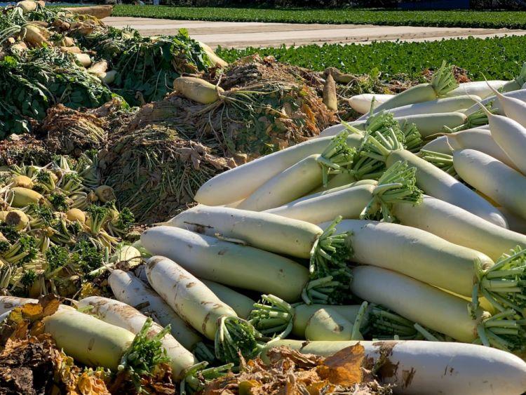 食品ロスの定義とは?日本の現状と、生産者による廃棄野菜削減アイデア