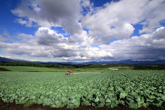 キャベツ 農薬散布