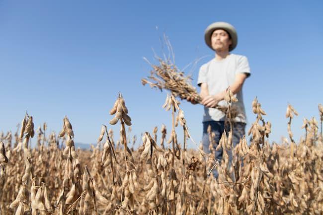 大豆 収穫作業