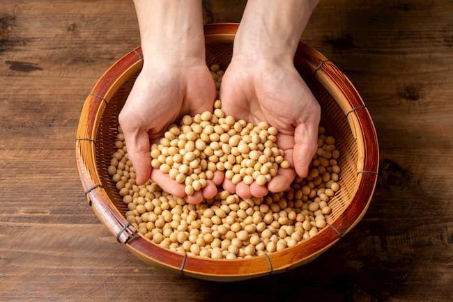 収穫した大豆 大豆をすくう手