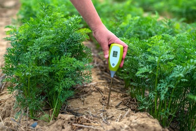 土壌ph 測定