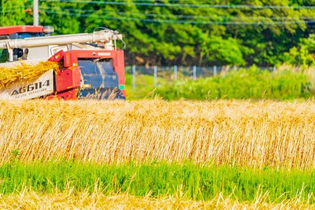 麦 収穫イメージ