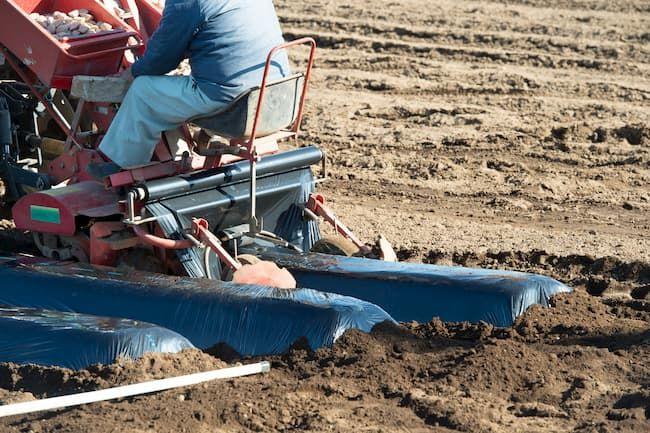ジャガイモ(馬鈴薯) 植え付け