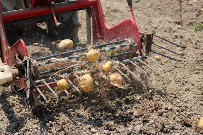 ジャガイモ 収穫 農機