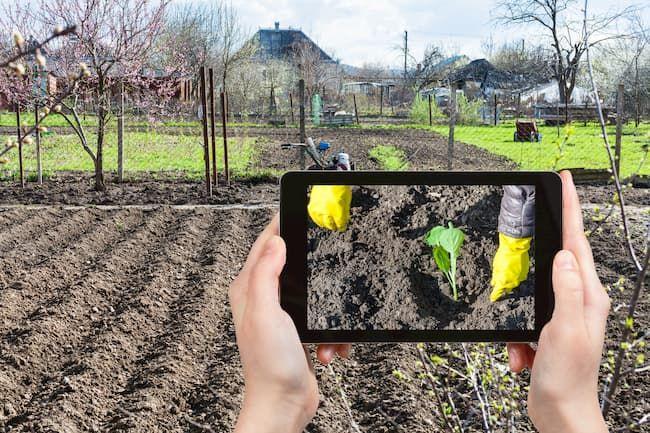 作物の栽培経過の写真を撮影している農家