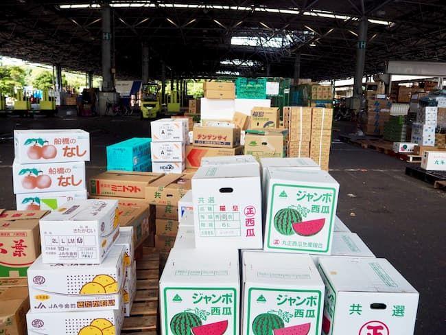 野菜や果実の卸売市場出荷・販売(大田市場)